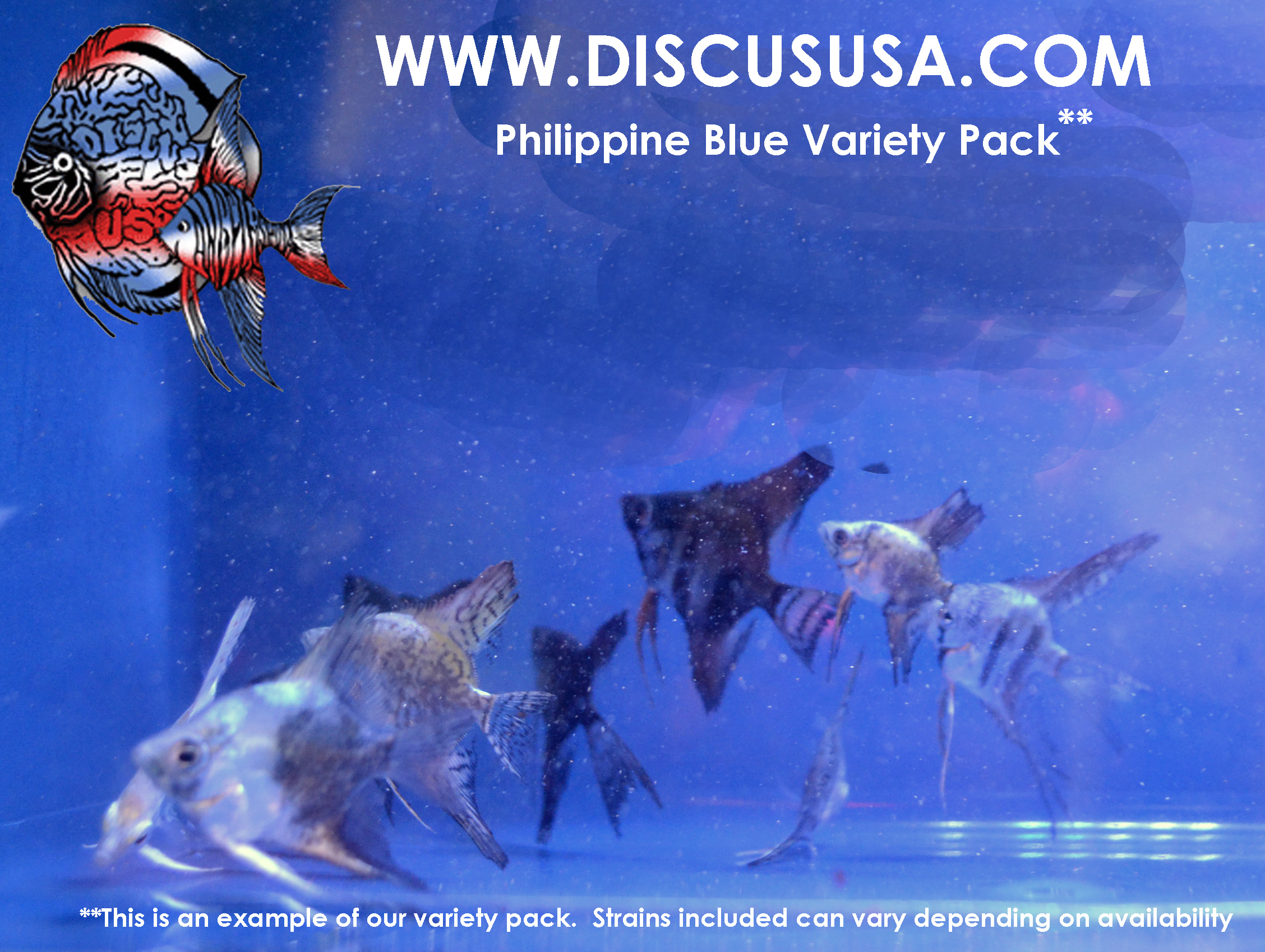 Philippine Blue Variety Pack Dime - nickel size (pack of 6) & FREE SHIPPING
